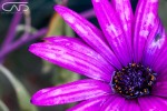 Close up wet purple flower Web #Creative Gallery