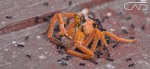 Dead Spider and Ants Macro Zoom Close up Web #CreativeGallery