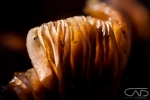 Mushroom close up