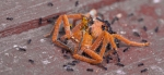 Spider fighter ants macro close up photo